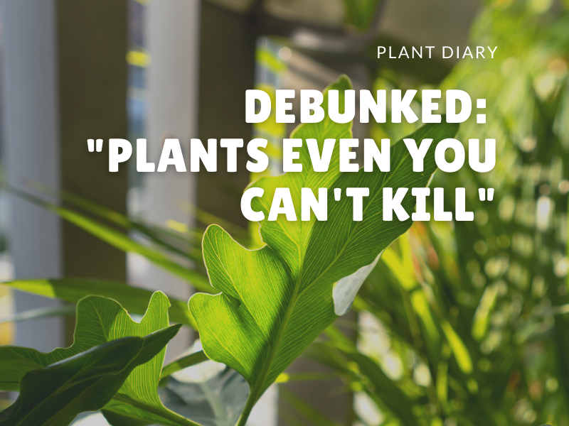 """Debunked: """"Plants Even You Can't Kill"""""""