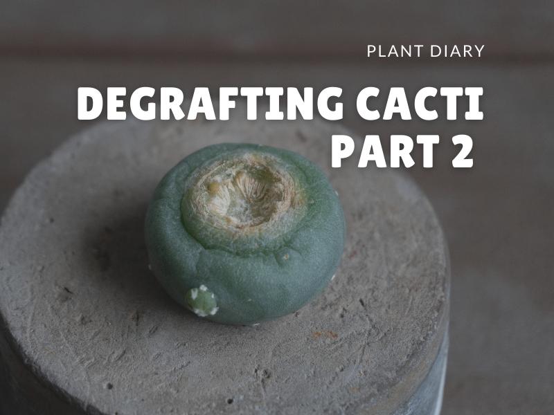 degrafting cactus