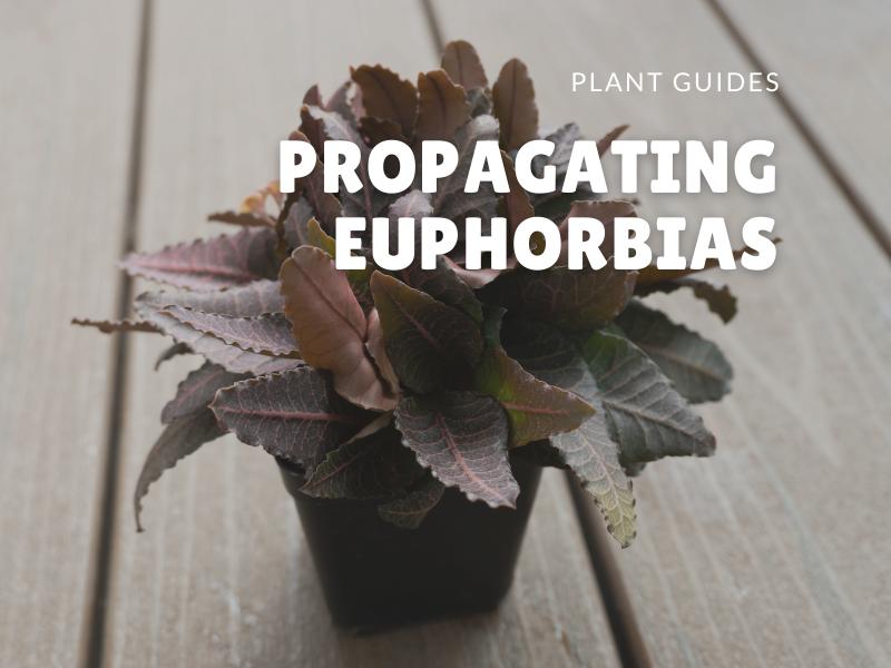 propagating euphobias